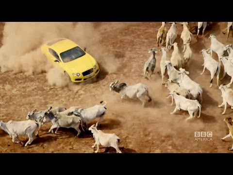 On TOP GEAR episode 2- The guys are outsmarted by...a herd of cows?