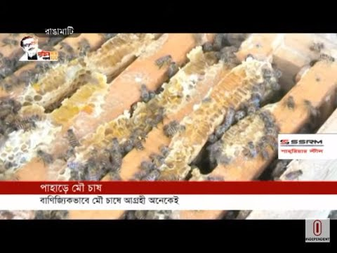 Successful farmers in commercial honey production in Rangamati (02-07-2020) Courtesy:Independent TV