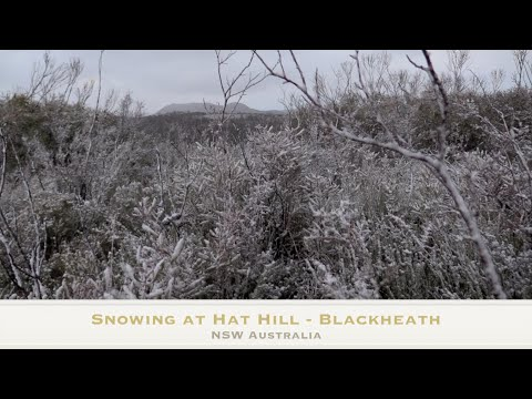 Bush Walk Snowing at Hat Hill Blackheath