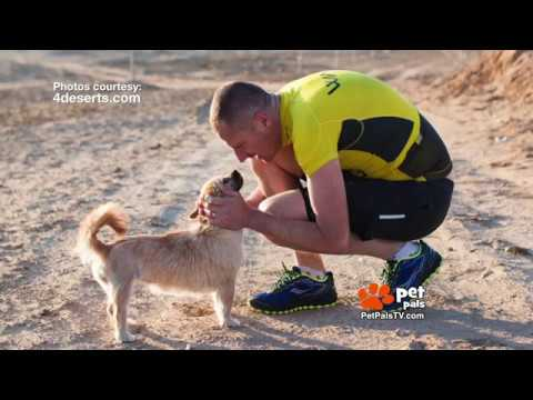 Finding Gobi - The Desert Dog