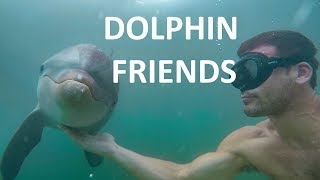 Dolphin friend