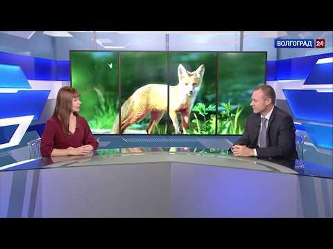 Экзамен для охотника. Андрей Шалаев, заместитель председателя комитета природных ресурсов, лесного хозяйства и экологии Волгоградской области