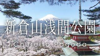 絶景 空撮 新倉山浅間公園 忠霊塔の桜と富士山 -  Cherry blossoms and Mt.Fuji at Chureito Pagoda taken with a drone