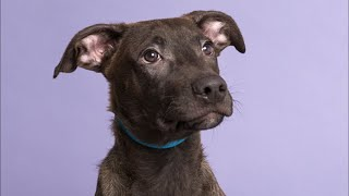 Live: Adoptable Puppy from Puerto Rico Plays With Friend in NYC | The Dodo Live by The Dodo