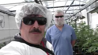 7 Acres 1 of the Worlds Largest LEGAL GROWS !!! by Urban Grower