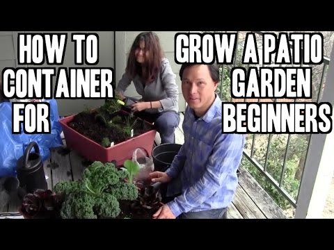 , title : 'How to Grow an Easy Patio Apartment Container Garden for Beginners'