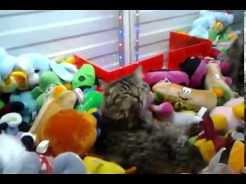 天氣太冷,貓咪躲進娃娃機!