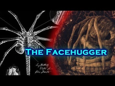 Secrets of the Facehugger! / Alien Facehuggers Explained