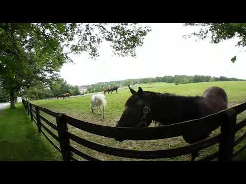 360 Talking to Horses