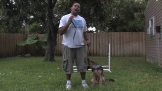 Dog Training&Care : Exercise Ideas With Your Dog