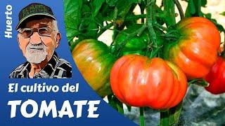 EL CULTIVO DEL TOMATE ,Tomato crop, Culture de la tomate- Guía completa (miquera73)