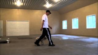 Beemer (Miniature Poodle) Boot Camp Dog Training Video