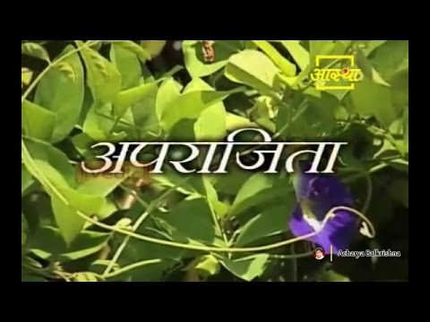 Ayurvedic Benefits of Aparajita (Clitoria Ternatea) for Elephantleg