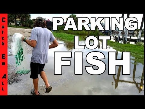 FISH in FLOODED PARKING LOT!