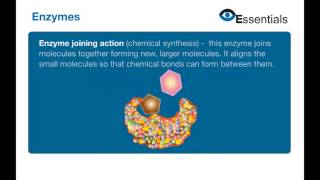 Essentials Video Animation - Enzymes