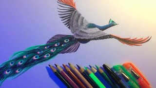 Blacklight Peacock Drawing Timelapse