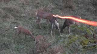 Video BOWHUNTING: Double Deer Morning!!! MP3, 3GP, MP4, WEBM, AVI, FLV Mei 2017