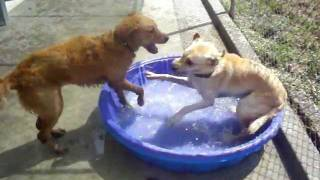 Doggie Pool Time at Canine Campus in Colorado Springs