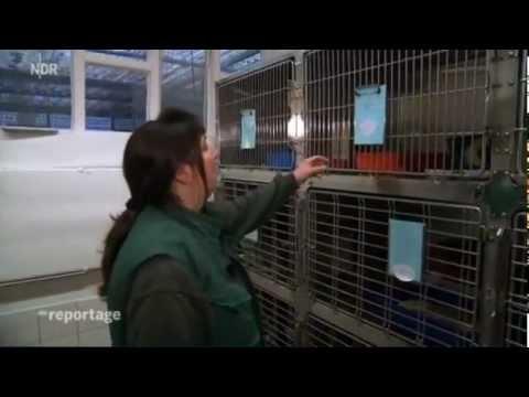 Katzen: Katzen-Alarm! Invasion der Streuner - Dokumenta ...