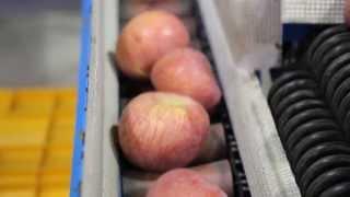 video thumbnail [Fruit-Vegetables] Fresh Apples for Export youtube