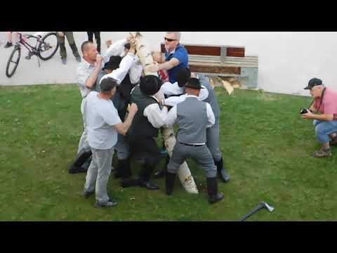 VIDEO z dediny pri Spišskej: Chlapi sa museli popasovať s 13-metrovou brezou