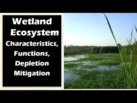 :Wetland Ecosystem: Characteristics, Functions : Ecology And Environment For UPSC IAS