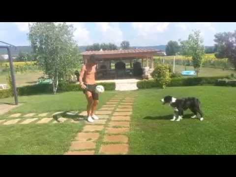 dog dribbles the ball with his master - incredible!