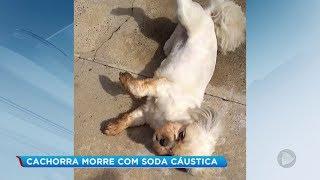 Polícia Civil investiga morte de cachorra em São Manuel