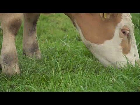Μείωση κονδυλίων για τα αγροτικά