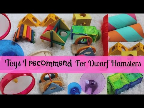 Toys I recommend for Dwarf Hamsters