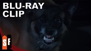 Nonton Darkness Rising (2017) - Clip 2: The Dog Film Subtitle Indonesia Streaming Movie Download