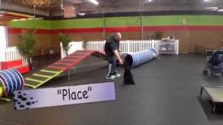 Bogey Scanlon, Miniature Poodle, Dog Training Charlotte North Carolina