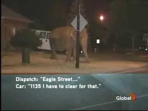 Elefantti karkuteillä – Kuuntele hätäpuhelu!