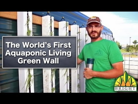 World's First Aquaponic Living Green Wall