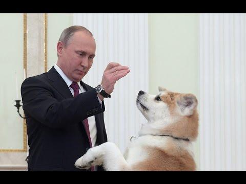 普丁帶著日本送的秋田犬接見外賓,結果才剛會面就讓日本外賓被嚇死了…