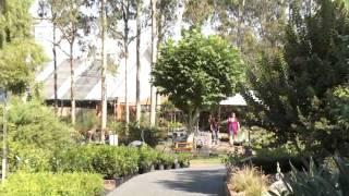 East Maitland Australia  city photos gallery : Nurseries East Maitland Heritage Gardens Nursery NSW