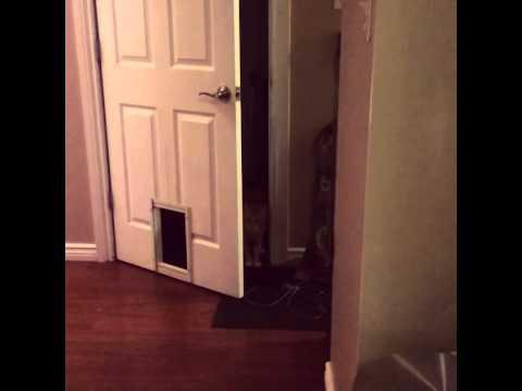 主人幫貓咪在門上裝了一個貓咪門,結果貓咪的驚人使用方法讓他同時很佩服但也很失望…