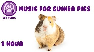 Relaxing Music for Guinea Pigs! - Pet Tunes are experts in creating unique pet relaxing music. Ever wondered how to relax my dog? How to relax my cat or pet?
