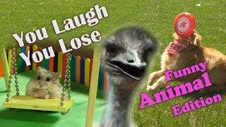 You Laugh You Lose - AprilsAnimals Funny Animals Edition by AprilsAnimals