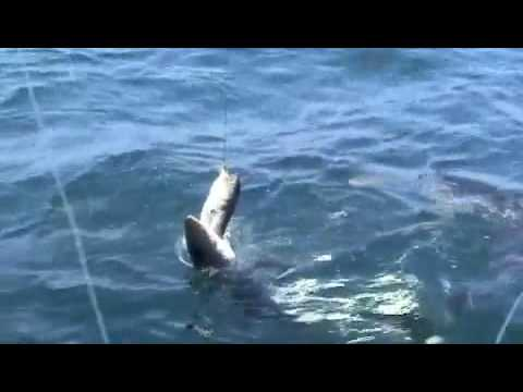 Video of Here Fishy