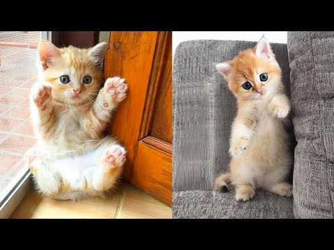 Baby Cats - Cute and Funny Cat Videos Compilation #35 | Aww Animals