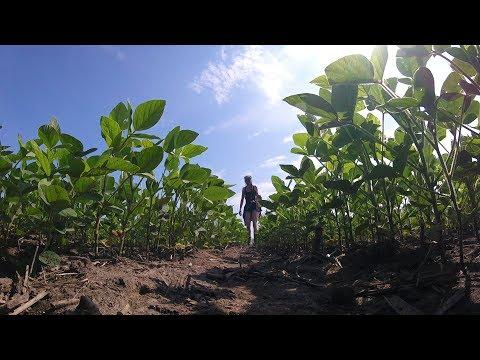 Video thumbnail: Field operations
