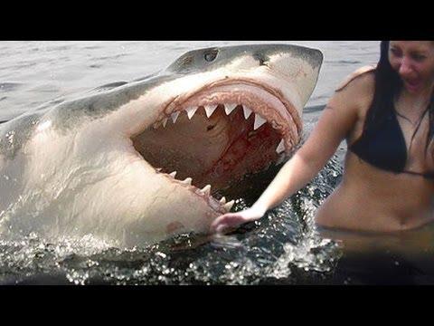 鯊魚咬人過程被拍錄了下來