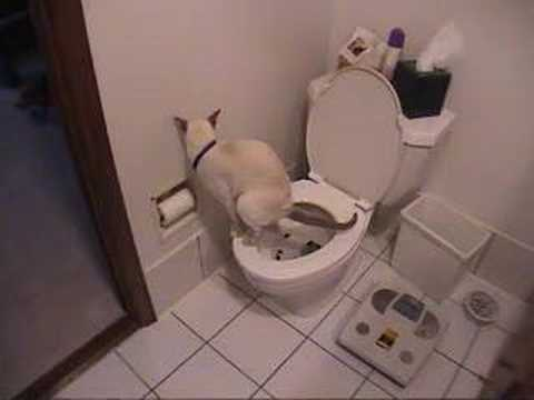 Using - cat using toilet paper.