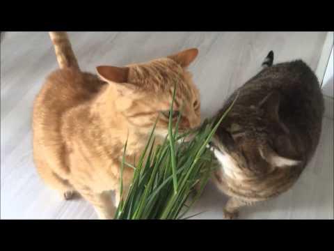 come rendere felice il vostro gatto (con poco)
