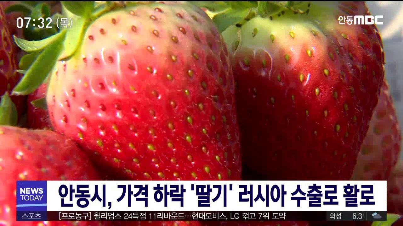 안동시, 가격 하락 '딸기' 러시아 수출로 활로
