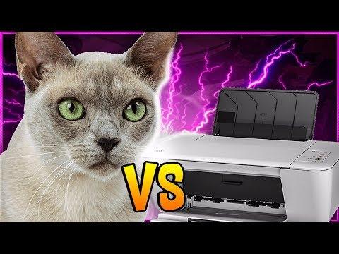 Gatos X Impressoras