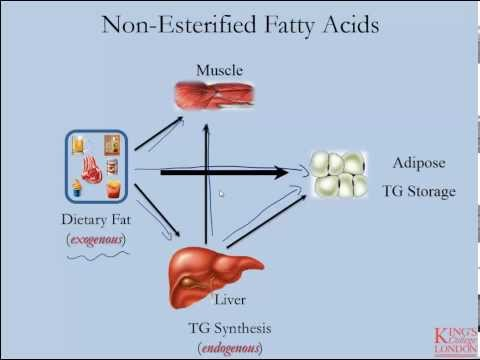 Lipids and Lipoproteins - Part 6 (Adipose and Non-Esterified Fatty Acids)