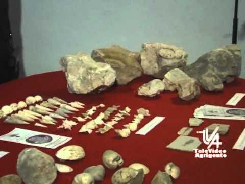Recupero di preziosi fossili