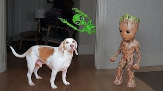 Groot Saves Dogs from Alien Skeleton! Funny Dogs Maymo & Potpie by Maymo
